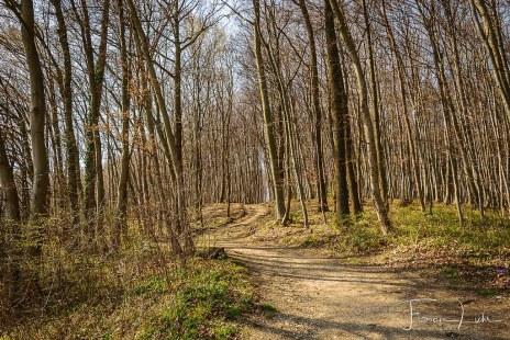 Natur in Purkersdorf