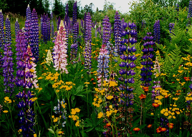 A profusion of wildflowers