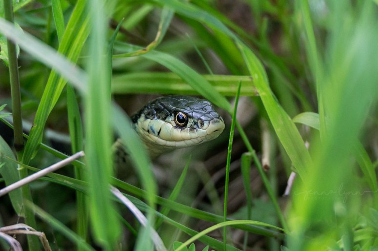 Image result for snakes the grass