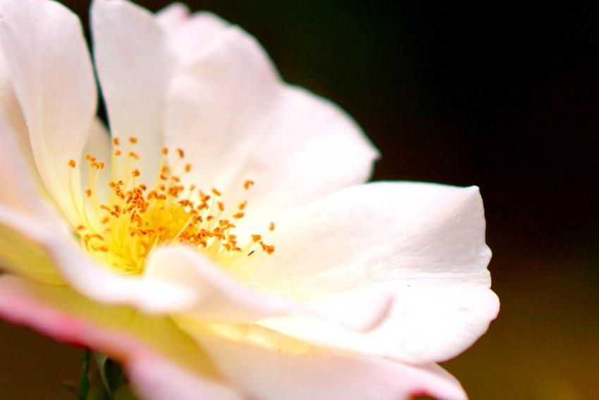 花マクロ1