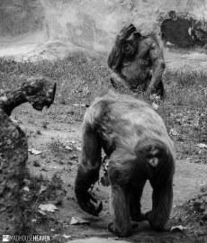 Barcelona Zoo - 0106
