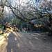 Arbol Parque Nacional de las Tablas de Daimiel Ciudad Real 04