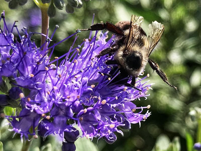 Bee handstand