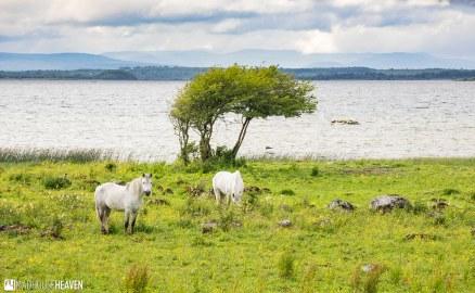 Ireland - 0789