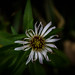 unstableflower