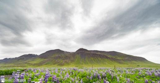 Iceland - 1359