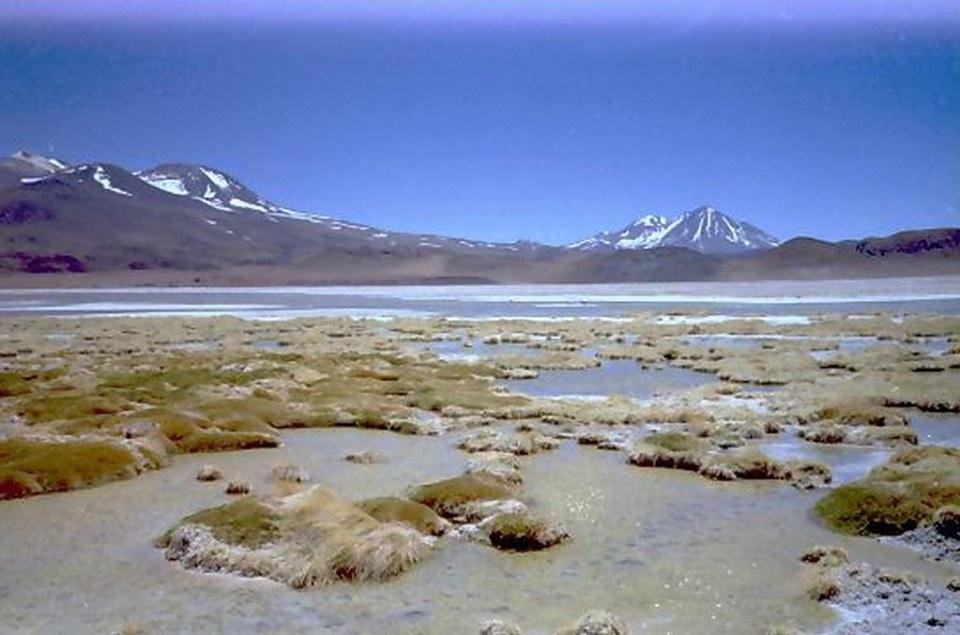 Lagunas de Miñique y Miscanti Chile 10