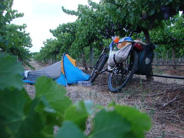 sleeping in the vineyard