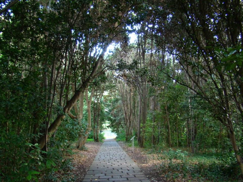 arboles Jardin Canario Gran Canaria Islas Canarias 19