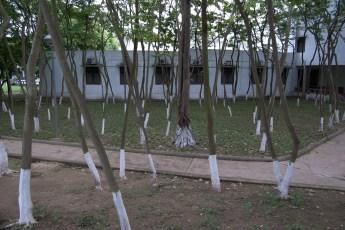 Wald hinter Ethnologiemuseum