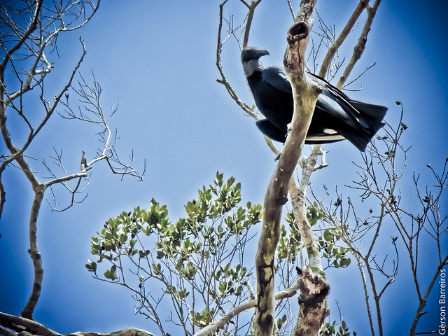 Contra-plongée buzzard
