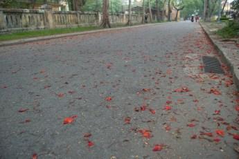 Blüten auf der Straße
