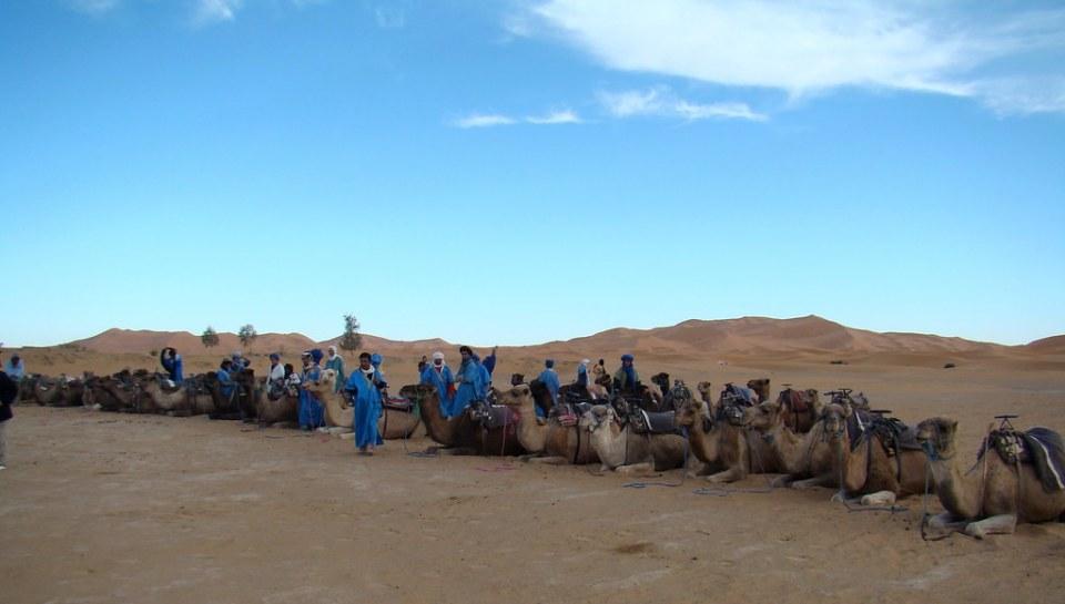 caravana de camellos en Dunas de Merzouga Erg Chebbi Marruecos 13