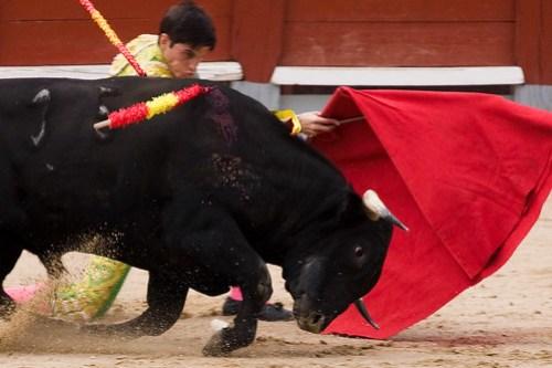 Corridas de toros - Chinchón 2009-11