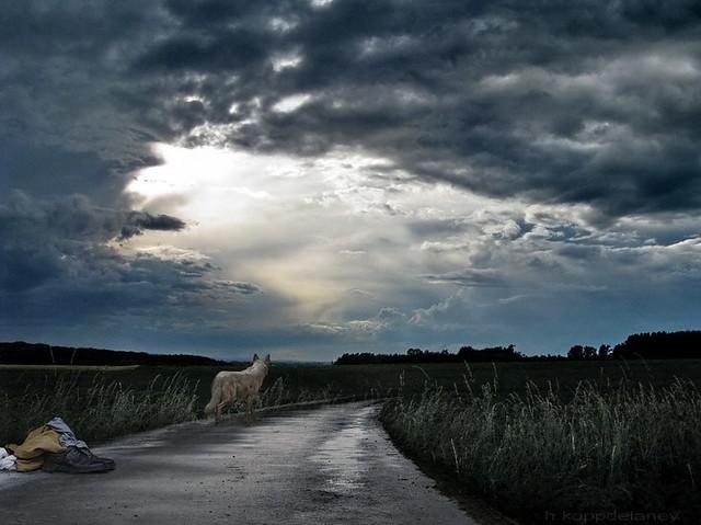 On the Road again - Lone Wolf - II
