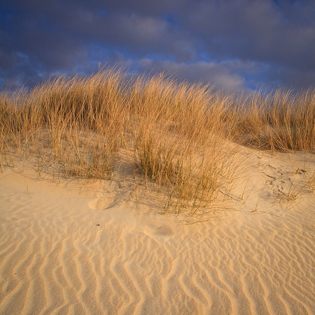 Luskentyre Dune