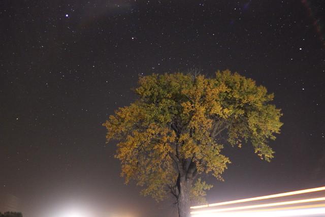 The halfway tree