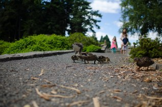 Baby Duckles and Attendant Human Childforms