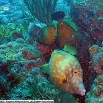 Reeffish vol1.01 (2)