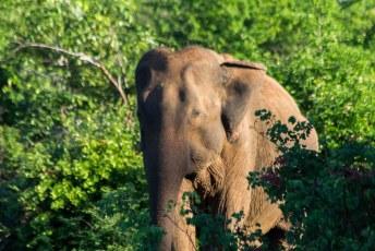 en weer een olifant