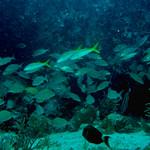 Reeffish vol1.01 (47)