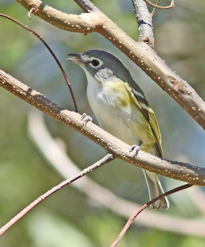 Return of the Birds - Episode 8