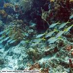 Reeffish vol1.01 (11)