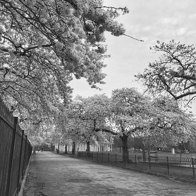 81/365 Blossom
