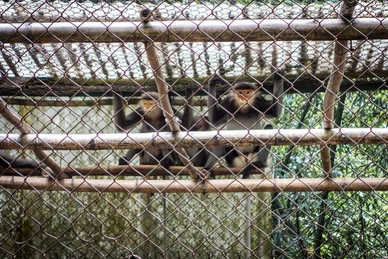 2013-06-05 Monkeys and Turtles - DSC04401-FullWM