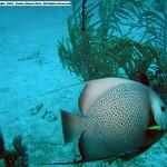 Reeffish vol1.01 (34)