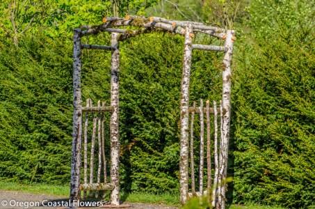 Birch Natural Wedding Arch-2