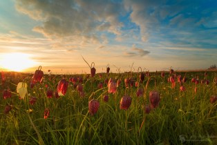 Fritillary Sunset view