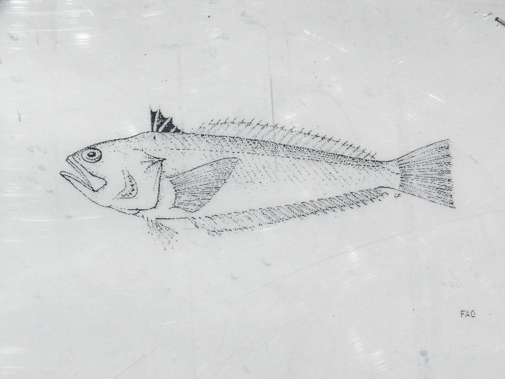 Fish Diagram Pollock