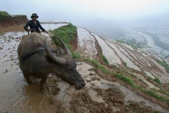 Reisanbau Lau Chau