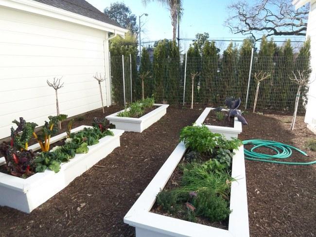 Dream Home kitchen garden on tour