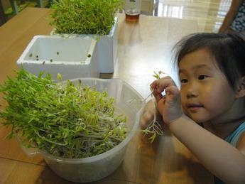 觀察生命的另一章。綠豆發芽(3.9ys)
