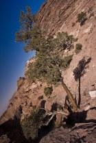 tree of Petra III