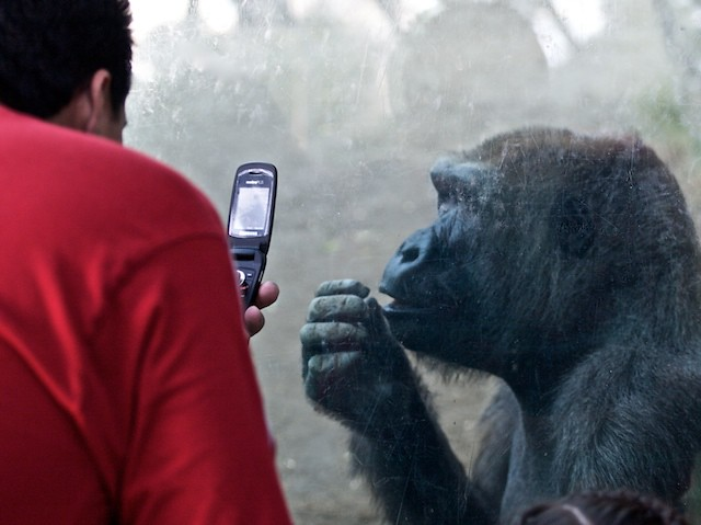 So tell me more about your cell phone's data plan...