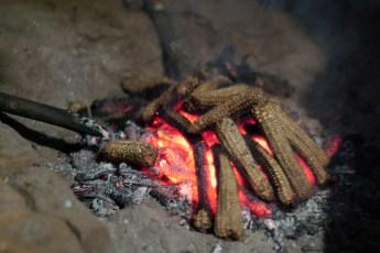 Mais-Feuer