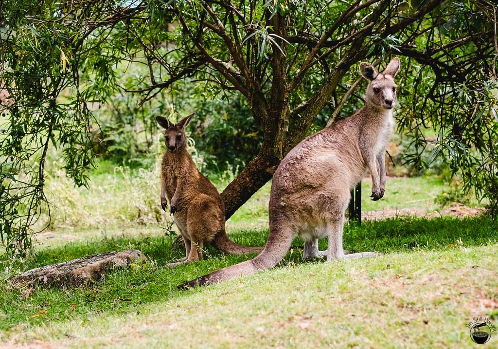Tasmania 2016-344