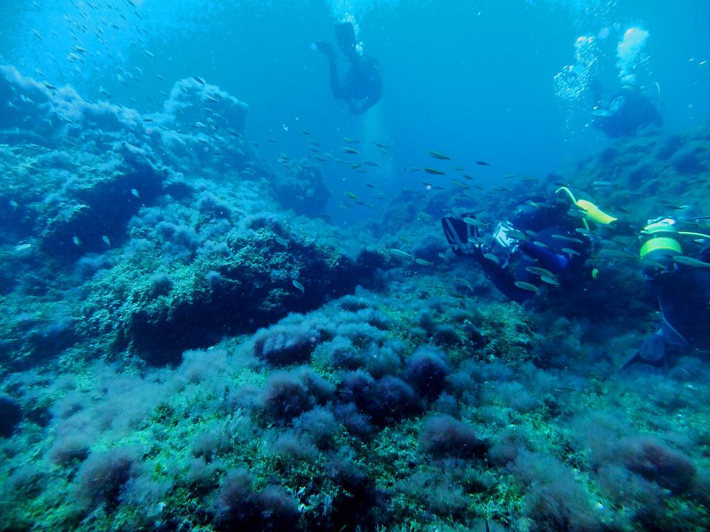 Ibiza underwater