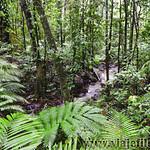 10 Viajefilos en Australia, Cape Tribulation 010