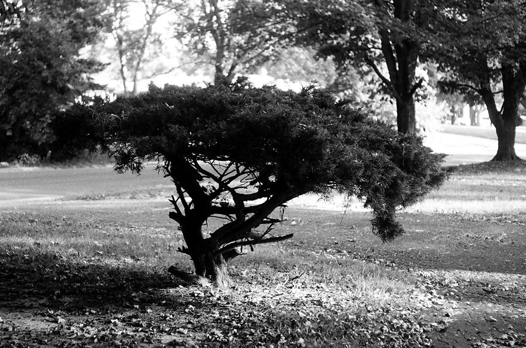 Sculpted shrub