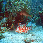 Reeffish vol1.01 (54)