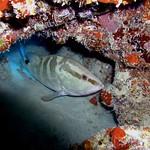 Reeffish vol1.01 (15)