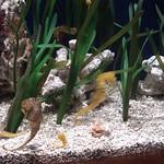 Oceanografic Miguel, acuario 06