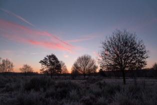 Ein Wintermorgen II