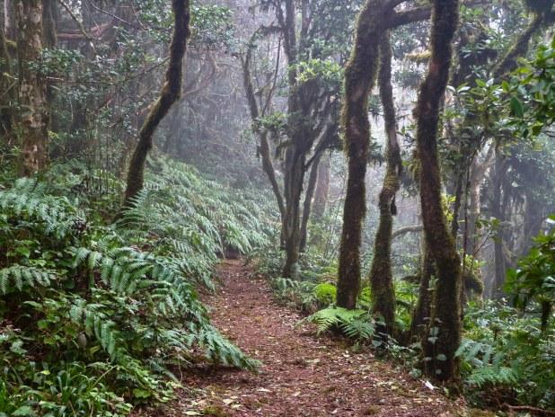 Visitar el Bosque Encantado en Tenerife