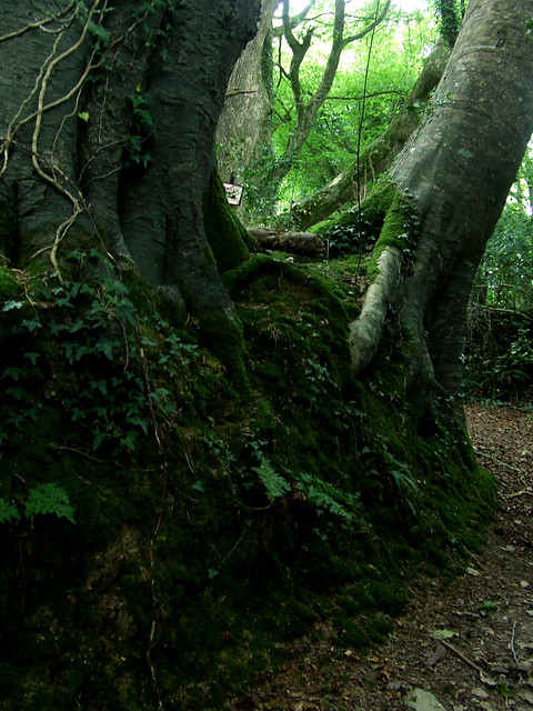 mossy tunnel 3