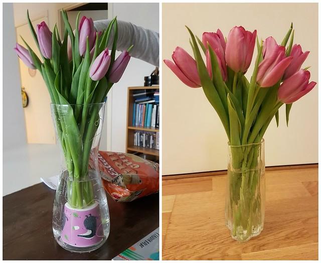 Tulpanerna vid inköp